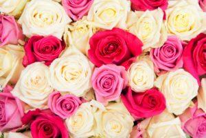 Milwaukee Florist: Milwaukee Blooms