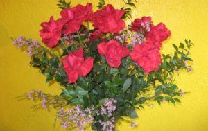 Signature Red Millennium Rose