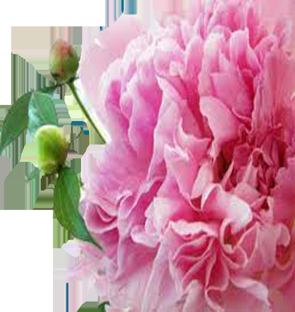 Milwaukee florist milwaukee blooms milwaukee florist izmirmasajfo